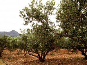 Oilarium is born from our passion on Spanish Olive Oil
